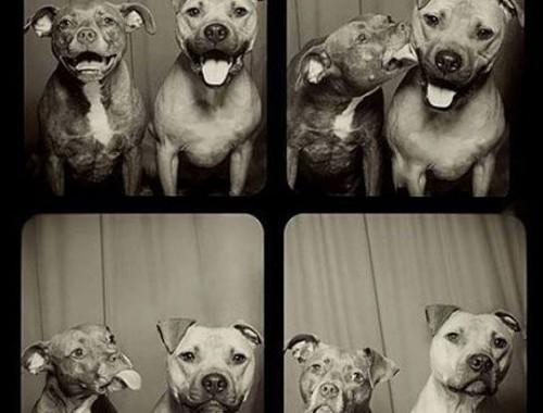 honden in een fotohokje
